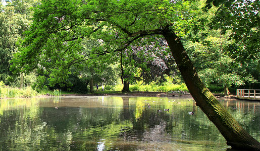 New nature reserves plan to boost green spaces commitment