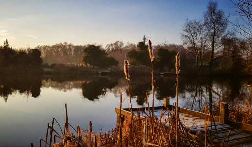 New Local Nature Reserve for Dawley