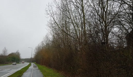 Tree works along Donnington Wood Way