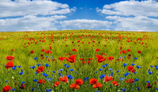 Wildflower seeds sent to residents to support biodiversity