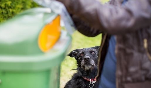 Plans to introduce new fines for dog fouling